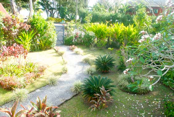 A little garden that boasts some quite exotic plants (even for Rarotonga)