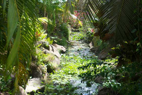 tropical stream with fish and water lillies, just outside.