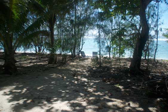 the beach with ironwood trees